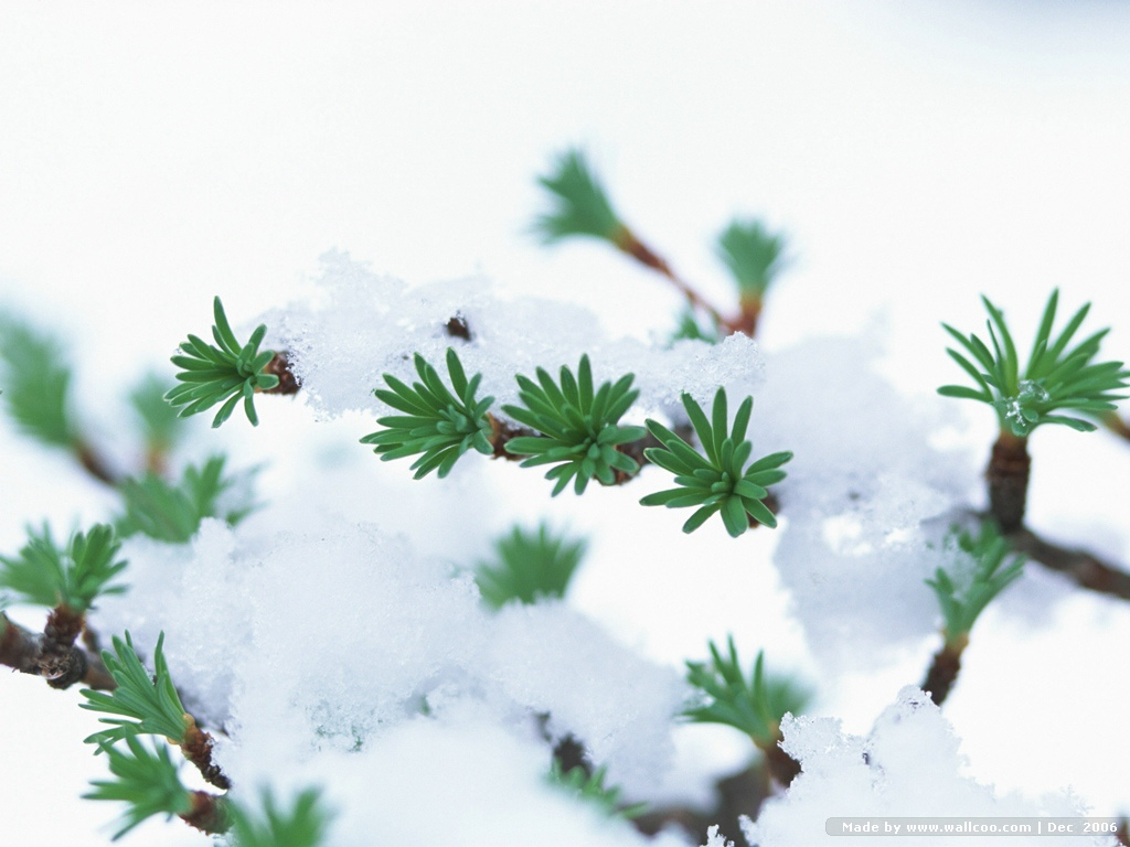 冰雪中的一片树叶 - 玫瑰小手 - 陶然亭